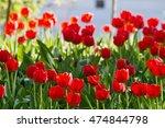spring flower bed in the park... | Shutterstock . vector #474844798