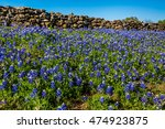 A Texas Rock Wall Lined With...