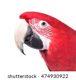 isolated parrot. isolated on... | Shutterstock . vector #474930922