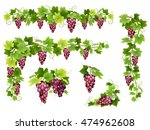 set of bunches of red grapes.... | Shutterstock .eps vector #474962608