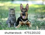 Stock photo cute dog and cat on green grass 475120132
