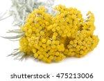 Helichrysum Flowers Isolated O...