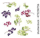 bunches of grapes on a white... | Shutterstock . vector #475258756