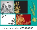 vector set lotus and koi for... | Shutterstock .eps vector #475328935