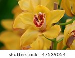 Yellow Orchid Flower In The...