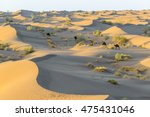 Wild Camels In The Sand Dunes...