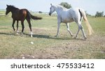 group of horses grazing on the... | Shutterstock . vector #475533412