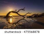 sunrise over a driftwood...   Shutterstock . vector #475568878