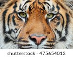 close up detail portrait of... | Shutterstock . vector #475654012