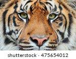 close up detail portrait of...   Shutterstock . vector #475654012