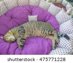 Stock photo a deep sleeper cat on the cat s bed as the most happiest 475771228