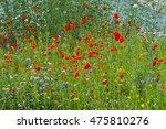 Colorful Wildflowers  Poppy...