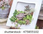 echeveria | Shutterstock . vector #475855102