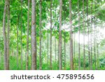 teak trees in an agricultural... | Shutterstock . vector #475895656