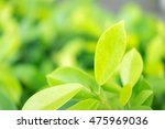 close up nature view of green... | Shutterstock . vector #475969036