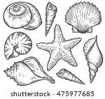 Seashell  Starfish Nature Ocea...