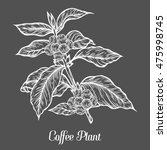 coffee plant branch with leaf ... | Shutterstock .eps vector #475998745