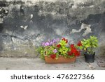 pots with pelargonium and red... | Shutterstock . vector #476227366