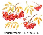 Watercolor Set Of Red Berries...