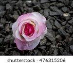 closeup shot of beautiful...   Shutterstock . vector #476315206