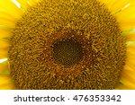 a macro photograph of a yellow... | Shutterstock . vector #476353342