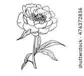 vector of hand drawn peony and... | Shutterstock .eps vector #476372836