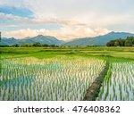 Rice Field In Countryside  Nan...