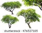 green fresh leaf isolated white ...   Shutterstock . vector #476527105