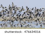 Wild Geese   The Greylag Goose...