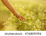 child hand touching field grass | Shutterstock . vector #476809396