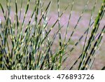 tiger grass | Shutterstock . vector #476893726