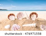 Sea Shell Decorate On Tropical...