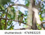 bird | Shutterstock . vector #476983225
