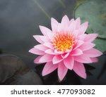 beautiful lotus flower | Shutterstock . vector #477093082