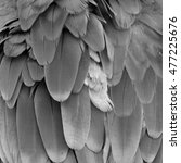 black and white scarlet macaw... | Shutterstock . vector #477225676