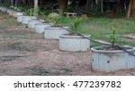 lime plant | Shutterstock . vector #477239782
