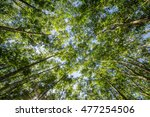 top of rubber tree and rubber... | Shutterstock . vector #477254506