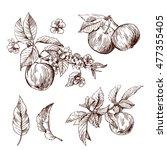 beautiful hand drawn vector... | Shutterstock .eps vector #477355405