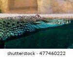 crocodile head protruding out... | Shutterstock . vector #477460222