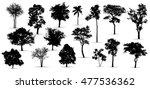 Black Tree Silhouettes On Whit...