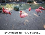flamingos on one leg | Shutterstock . vector #477598462
