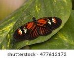 tropical butterfly dido... | Shutterstock . vector #477612172