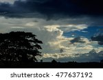 tree silhouette in evening time ... | Shutterstock . vector #477637192