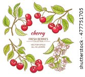 cherry vector set  on white... | Shutterstock .eps vector #477751705