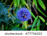 Bee On An Allium