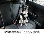 Stock photo dog with sticking out tongue sitting in a car seat 477777046