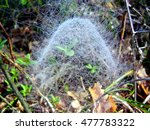 Web Of Filmy Dome Spider ...