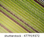 aerial agricultural view of... | Shutterstock . vector #477919372