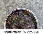 Black Sea Scorpion Fish Or...
