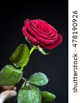 close up beautiful rose with... | Shutterstock . vector #478190926